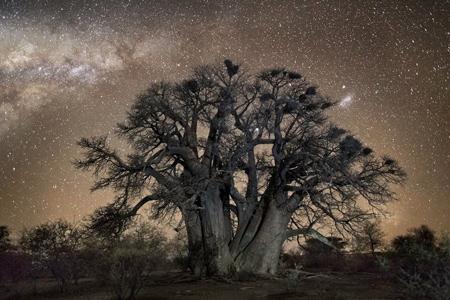کهنسال ترین درختان دنیا, کمیاب ترین و کهنسال ترین درختان