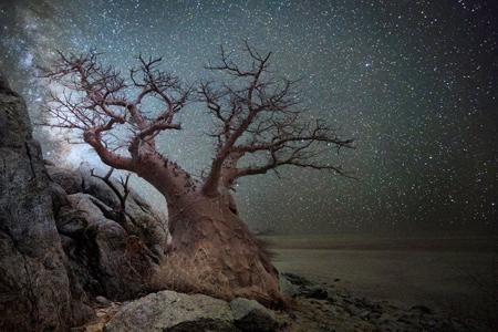 عکس های کمیاب ترین درختان, موقعیت های مکانی کهنسال ترین درختان