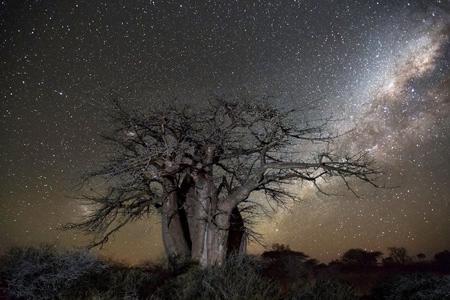 شناخت کهنسال ترین درختان دنیا, کمیاب ترین درختان