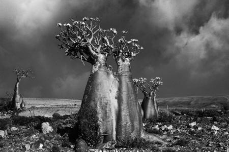 کمیاب ترین درختان, عکس های کمیاب ترین درختان