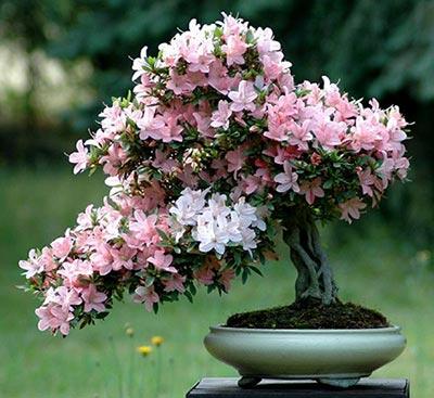 گیاهان زینتی,گیاهان آپارتمانی,انواع گیاهان زینتی