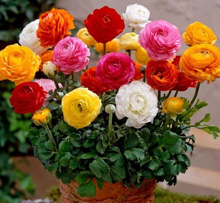 نگهداری از گل آلاله,کاشت گل آلاله