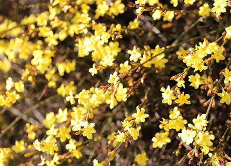 کاشت گل های بهاری, زمان کاشت گل ها