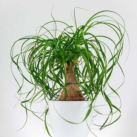 جالب ترین گیاهان آپارتمانی,نحوه نگهداری از گیاهان آپارتمانی
