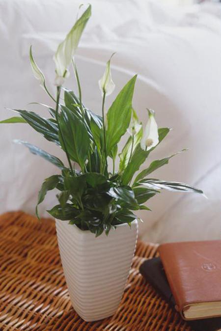گل مناسب ویژگی های شخصیتی هر فرد,معرفی گل های متولدین هرماه