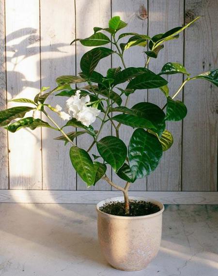 گیاهان آرام بخش,گیاهانی برای درمان استرس