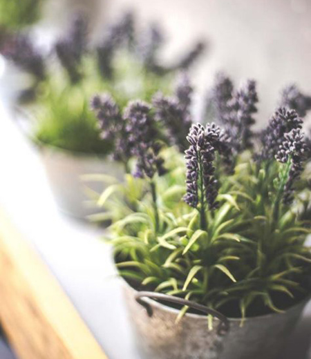 گیاهان ضد استرس,گیاهانی برای کاهش استرس