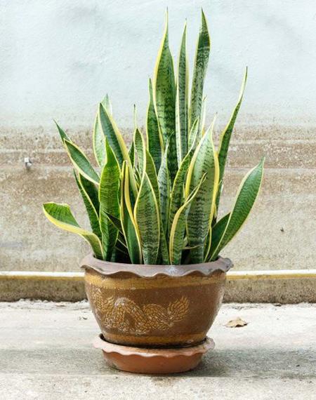 درمان استرس با گیاهان, گیاهان ضد استرس