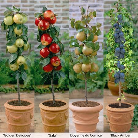 پرورش درختان میوه, کاشت درخت میوه