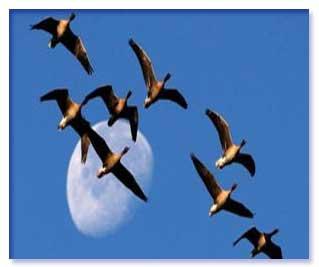 چشم راست کلید جهت یابی پرندگان