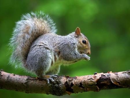 پرورش و نگهداري سنجاب