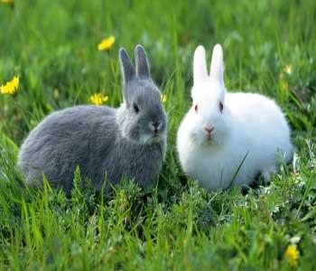 همه چیز درمورد خرگوش ها