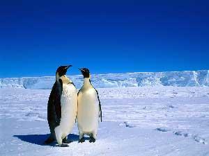 راز یخ نزدن خون جانوران قطبی