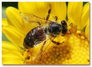 زنبورها جهان را پنج بار سریعتر از انسان می بینند