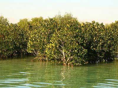 جنگلی زیر آب , عکس جنگلی زیر آب