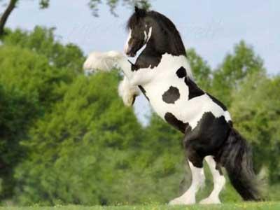 نگهداری اسب , پرورش اسب
