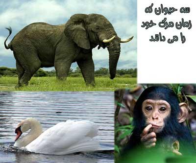 حیوانی که زمان مرگ شان را می دانند!