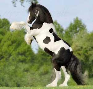 نژاد اسب ها, عکس اسب ها