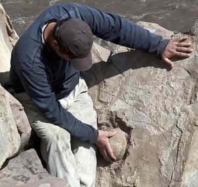 کشف تخم دایناسورهای 60 میلیون ساله
