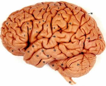 اعداد در داخل مغز انسان مشاهده شد