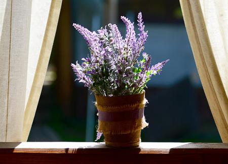 گل و گیاه خانگی, گل و گیاه تصفیه کننده