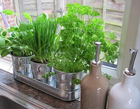 طرز کاشت سبزیجات,کاشت سبزیجات خانگی