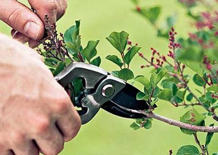 از بین بردن علف های هرز,اصول و نحوه نگهداری از گیاهان باغچه