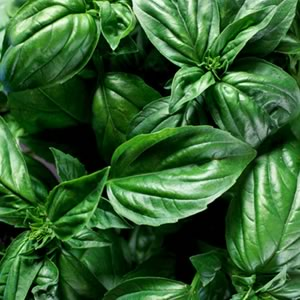 گیاهان سبز