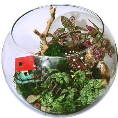 خاک مناسب تراریوم, گیاهان مناسب تراریوم