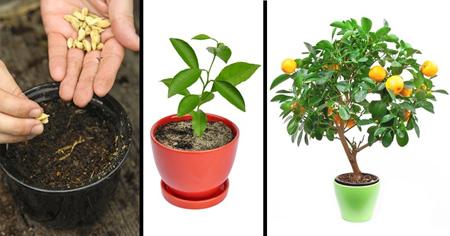 کاشت درخت با هسته میوه, کاشت انواع درخت با هسته میوه
