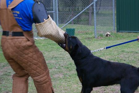 نحوه تربیت سگ,تربیت سگ,آموزش تربیت سگ