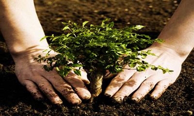انواع خاک,طبقه بندی انواع خاک ها,خاک