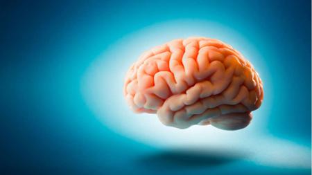 آشنایی با مغز انسان,مصرف کردن انرژی مغز انسان