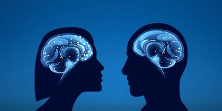 تفاوت مغز زنان و مردان,فعال بودن مغز زنان نسبت به مردان