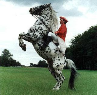 سوارکاری,شاخه های ورزش سوارکاری,اسب سواری