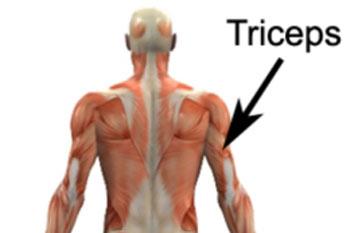 عضلات سه سر بازو, عضلات پشت بازو, تقویت عضلات سه سر بازو