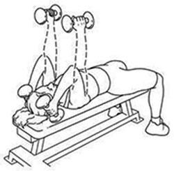 تقویت عضلات پشت بازو, تقویت عضلات سینه, تقویت عضلات بازو