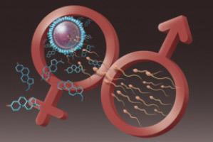 اسپرم,بهبود کیفیت اسپرم,راههای افزایش اسپرم,دانستنیهای جنسی
