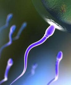 اسپرم,افزایش اسپرم,علت آسیبدیدگی اسپرم