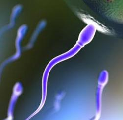اسپرم,راههای افزایش اسپرم,مایع منی