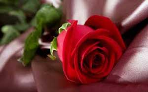 عشق میانسالی, روابط همسران