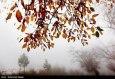 انعکاس, تصاویر  پاییز در گلستان